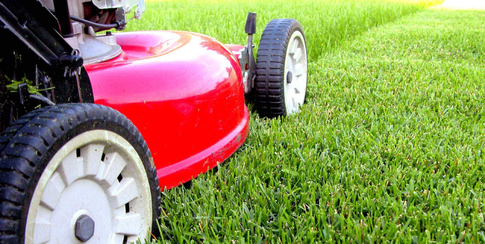 5 Lawn Tips - Troubleshoot Why Your Lawn Isn't Thriving