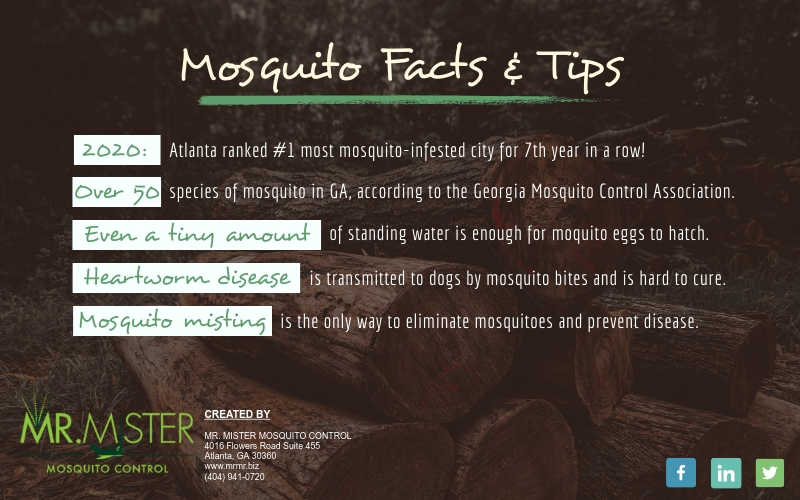 Mosquito Facts and Tips [infographic]