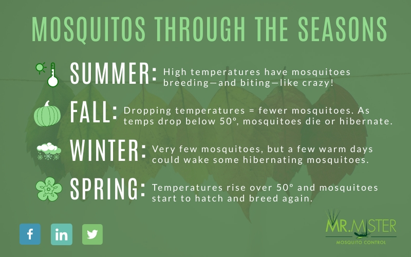 Mosquito Activity and When Mosquitoes Are Inactive [infographic]