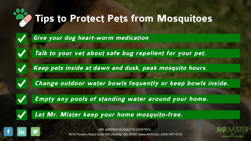 How To Protect Pets From Mosquitoes [infographic]